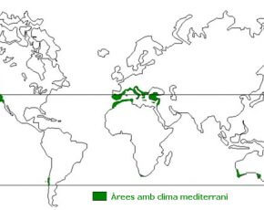 Catàleg d'espècies vegetals a Lloret de Mar