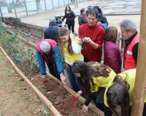La plantada de roses a l'Escola Falguera de Sant Feliu de Llobregat, tot un èxit