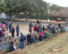 La plantación de rosales en la escuela Falguera de Sant Feliu de Llobregat, todo un éxito