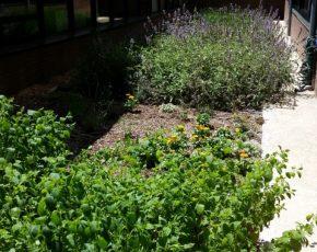 Escola sant roc - Viles florides
