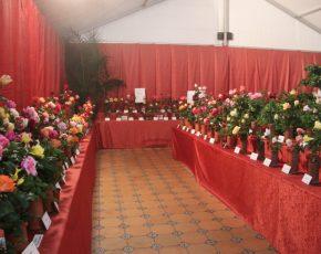 Exposició Nacional de Roses