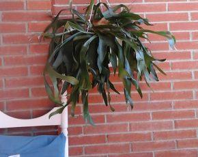 Cactus - Viles Florides