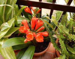 Balco amb flors - Viles Florides