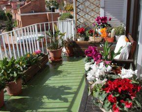 El balcó de la Isabel