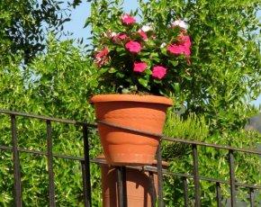 Test Flors Casa Rural Marcus - Viles Florides
