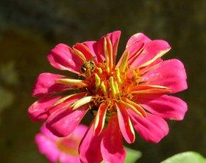Primer pla flor Casa Rural Marcus - Viles Florides