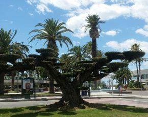 arbre Salou - Viles Florides