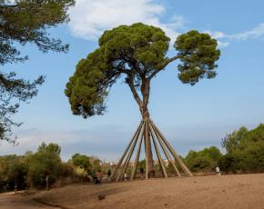 arbre sant cugat del vales - Vila Florida