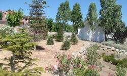 jardi Canyelles - Viles Florides
