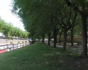 arbres Canyelles - Viles Florides