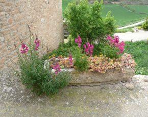 raco amb encant Rocallaura - Viles florides