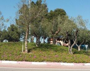 horticultura ornamental vinyols i els arcs