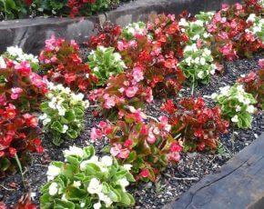 Flors Planoles - Vila Florida
