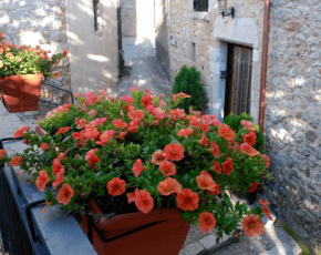 Vilanant flors - Viles Florides